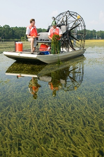 Hydrilla collection