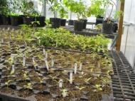 Common garden experiments